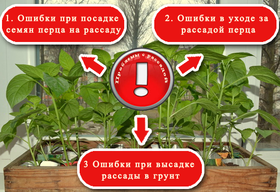 Основные ошибки, допускаемые при выращивании рассады перца