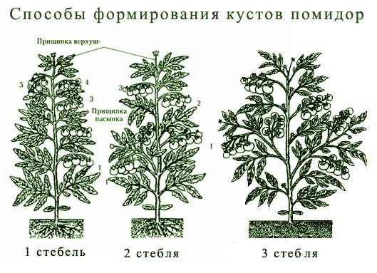 Формирование кустов помидор
