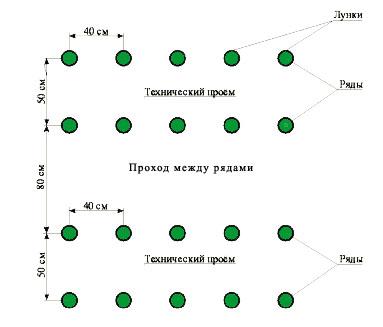 Схема высадки рассады помидор